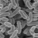 乳酸菌はどうやって摂ったらいいの?